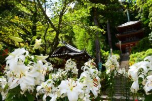 奈良県の花畑34品種82名所!春夏秋冬の見頃
