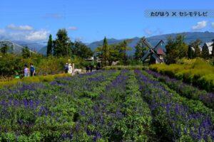 山梨県の花畑42品種109名所!春夏秋冬の見頃